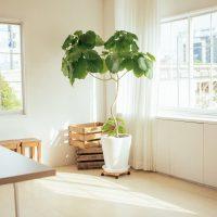 お家やお部屋の整理整頓4つの素晴らしい効果とは